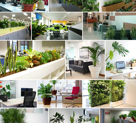 indoor live plant rental services